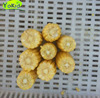 iqf delicious/good quality/organic sweet corn
