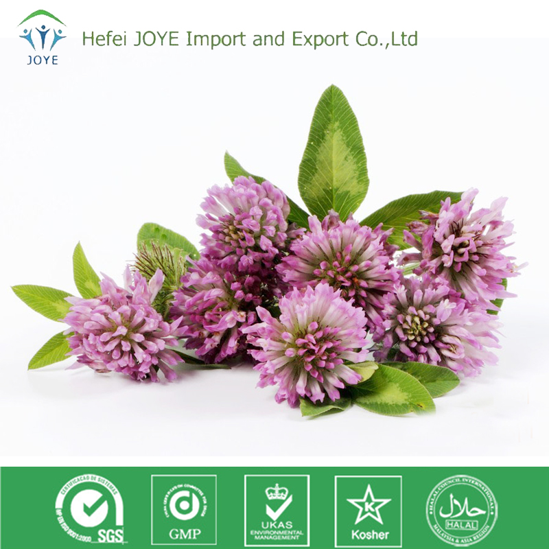 natural herb extrat 40% isoflavones red clover extract / p.e.