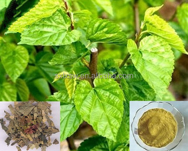 100% pure organic bio advanced high quality mulberry leaf/berry extract