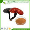 Health Care Product High Quality Reishi Mushroom Extract Powder