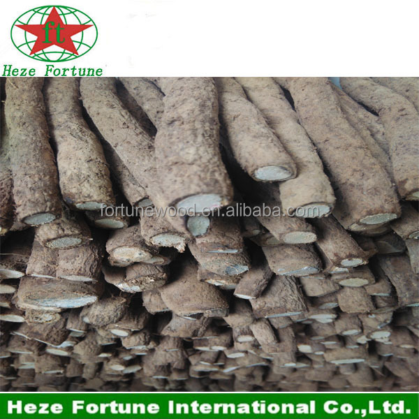 Asia native species paulownia Tomentosa roots cutting for planting