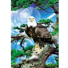 Wholesale animal 3d lenticular Owl wall poster printing