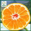 Good prices of fresh mandarin