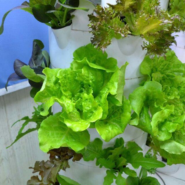 Skyplant Indoor Hydroponics System Vertical Tower