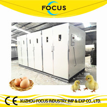 Focus industry group industrial incubators for hatching eggs for sale 3 years warranty