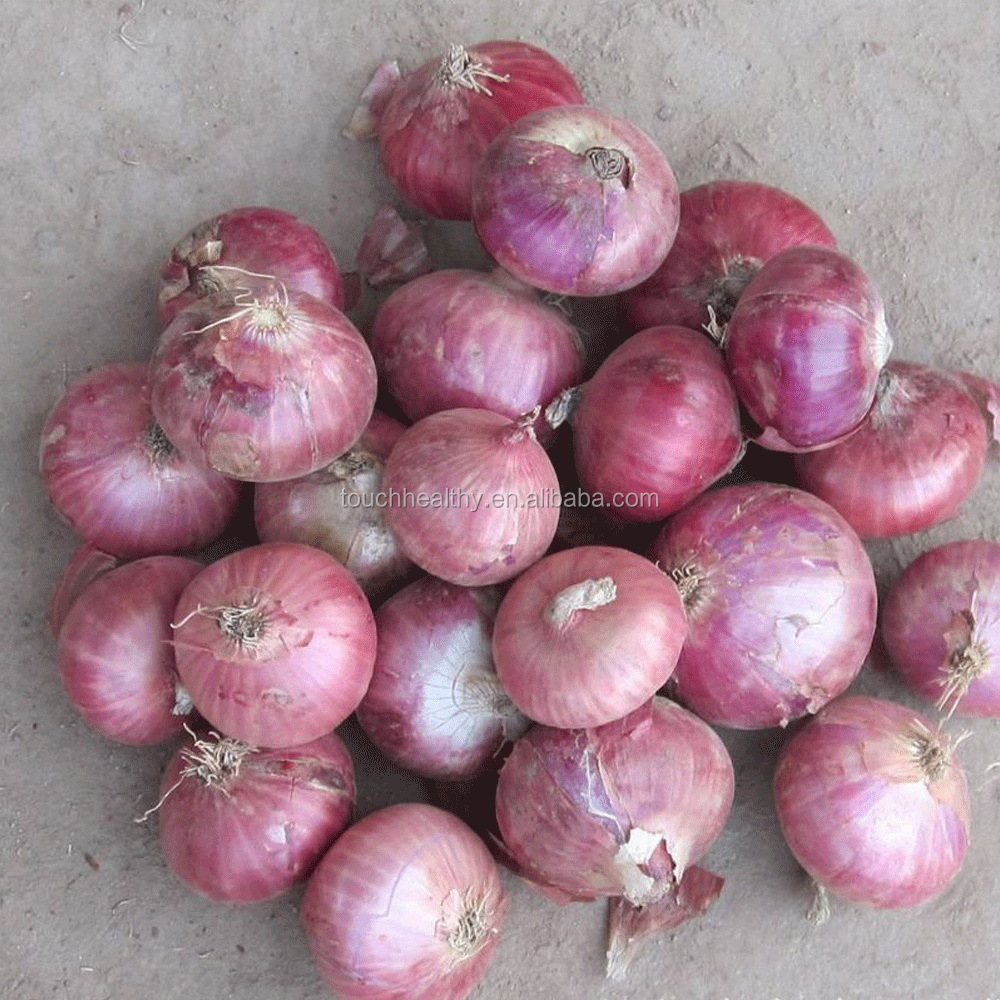 2017 Touchhealthy supply onion seeds price red onion seed for agriculture planting