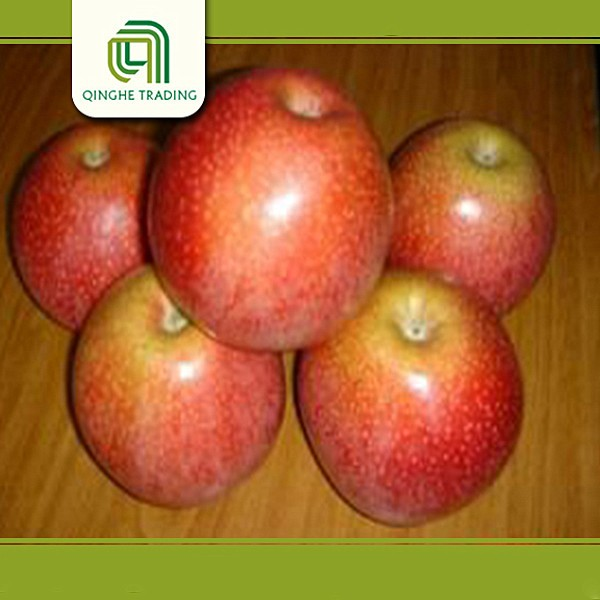 wholesale fresh produce wholesale exporter of chinese with low price