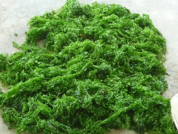 Ulva Lactuca Seaweed Buy Seaweed Product On Alibabacom