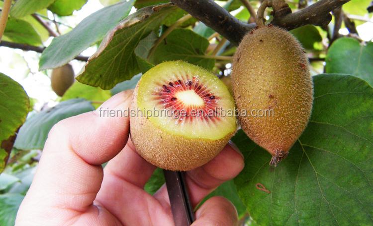 Kiwi albero piantina innesti di frutta piantine e for Pianta kiwi prezzo