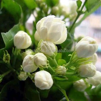 Flowers Health Tea Dried Flower Tea Thailand Jasmine Flower Buy