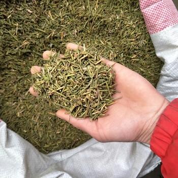 Bán Hot Ephedra Sinica/trung Quốc Ephedra/ma-huang Trà 500 Gam Miễn Phí Vận  Chuyển - Buy Ephedra Sinica Tea,Trung Quốc Ephedra Tea,Ma-huang Trà 500
