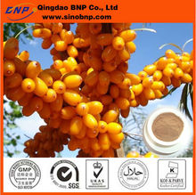 GMP Quality Sea Buckthorn Extract / Hippophae rhamnoides Extract