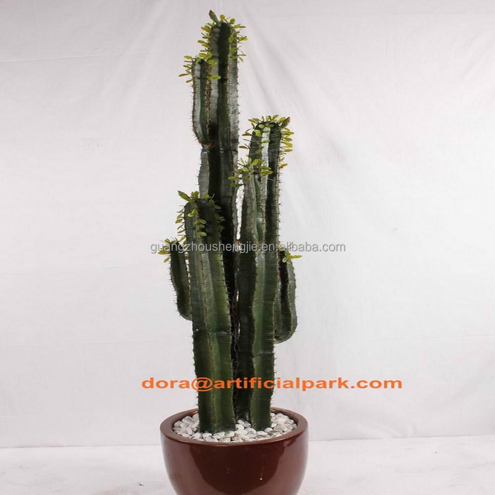 Pot De Plante Pas Cher plante cactus pas cher