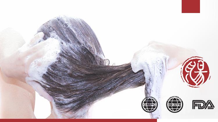 OEM/ODM free sample Herbal Professional salon use 500ml hair care organic Bio-plant hair shampoo