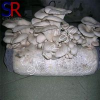Cultivating fresh mushroom economical price mushrooms seed