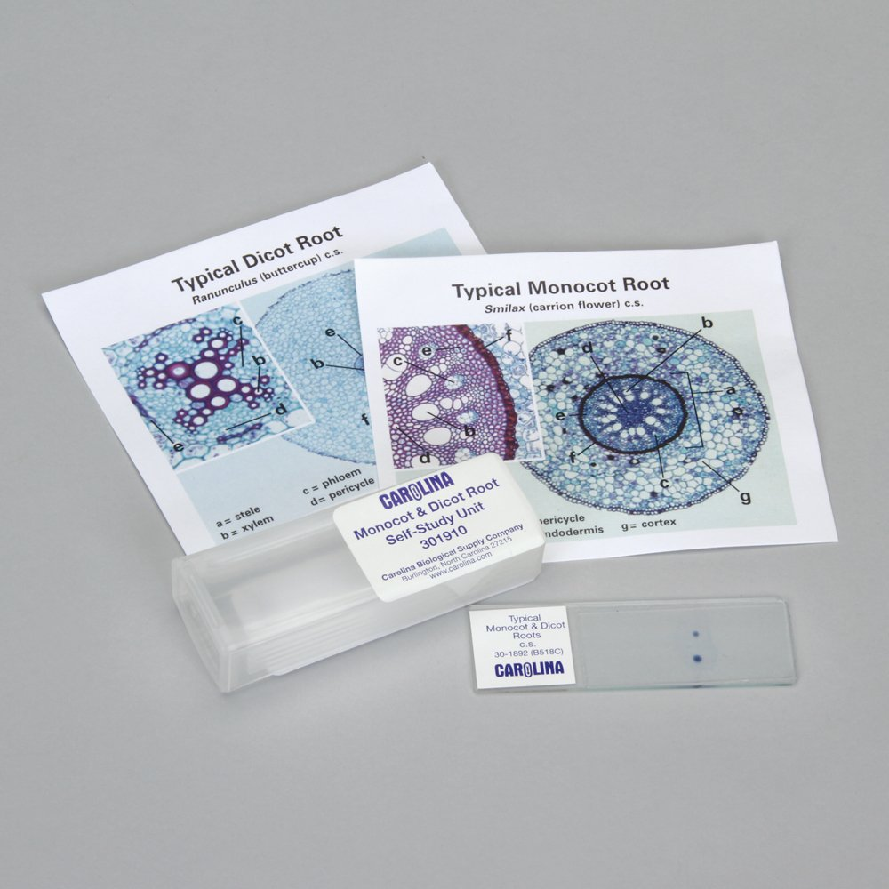 Buy Beginners Monocot Microscope Slide Set in Cheap Price on Alibaba.com