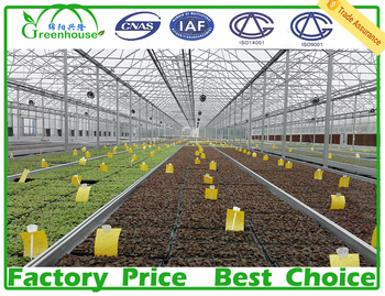 xl used hot galvanized steel pipe frame sheet greenhouses for sale