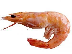 Resultado de imagen para camarón de mar