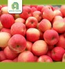 good brand red fuji apple with low price apple
