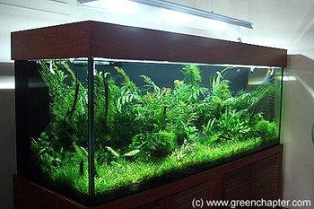 Planted aquarium 2 buy nature planted aquarium product for Aquarium vase pour poisson rouge
