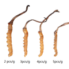 China supplier organic best dried swanson cordyceps sinensis