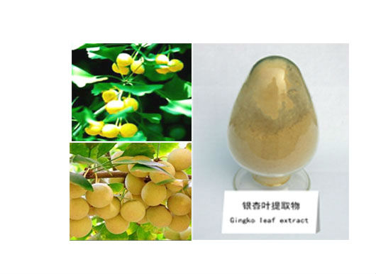good quality ginkgo nut,ginkgo biloba extract