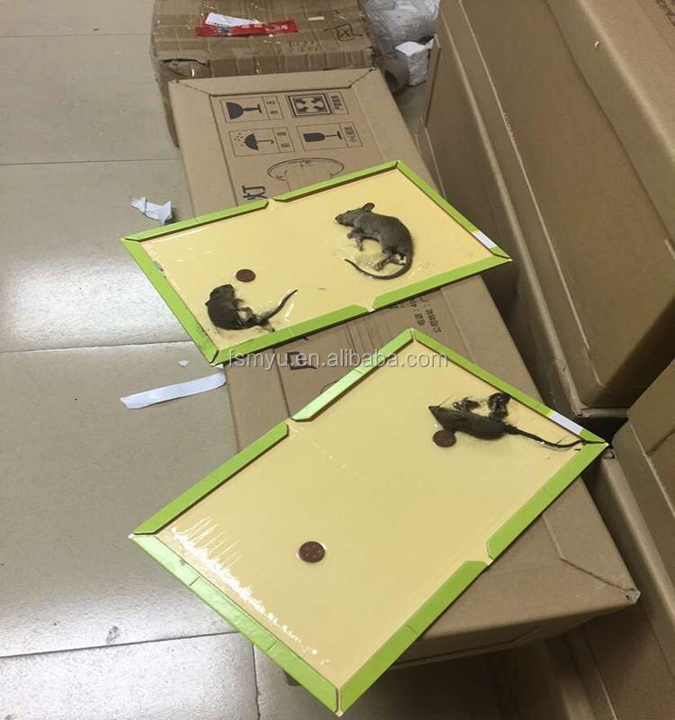 ניס מלכודת עכברים עכבר gule דבק דבק לוחות מלכודת עכברוש עכברוש דביק ZV-12