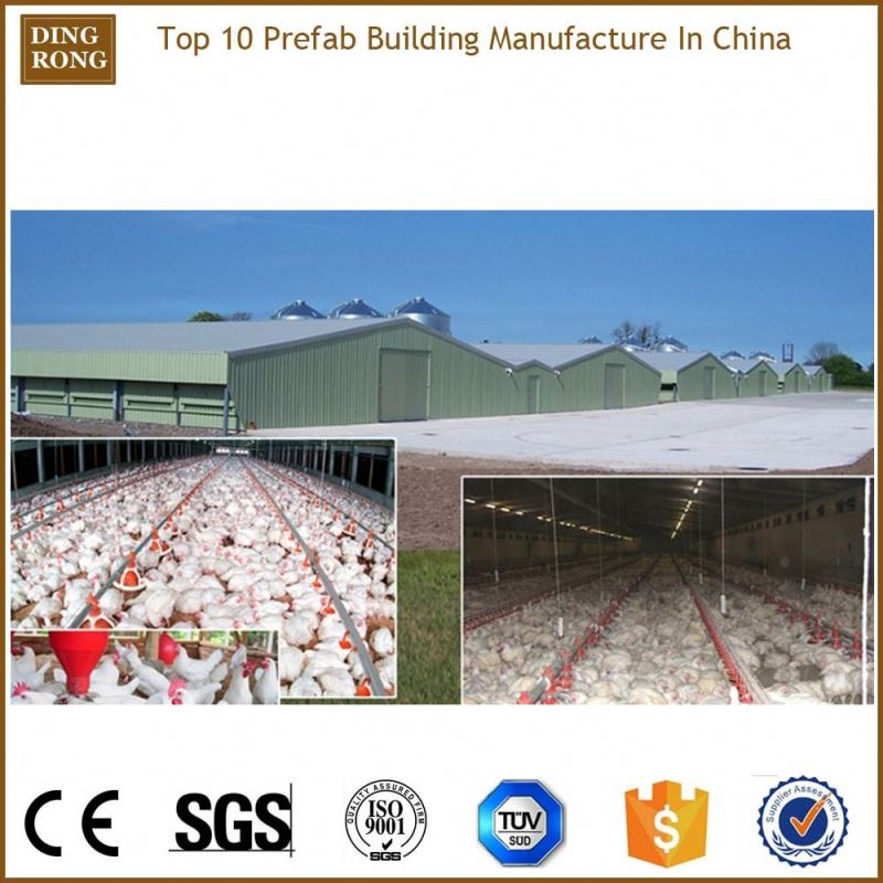 poultry commercial chicken house, layer or darking house