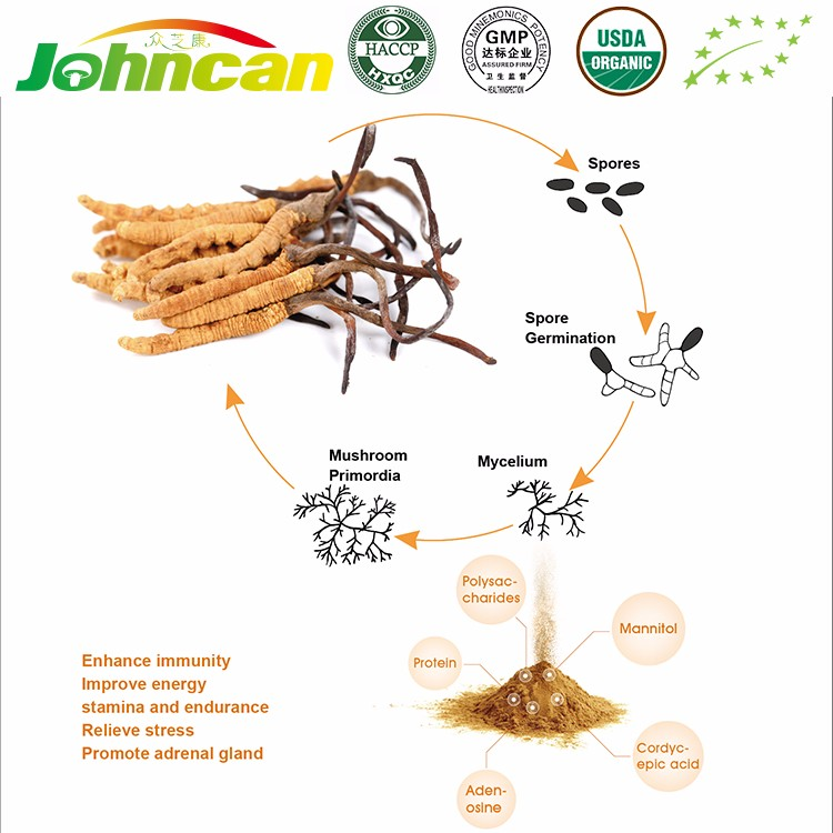 Pure Natural Health Care Supplies Cordyceps Sinensis Extract