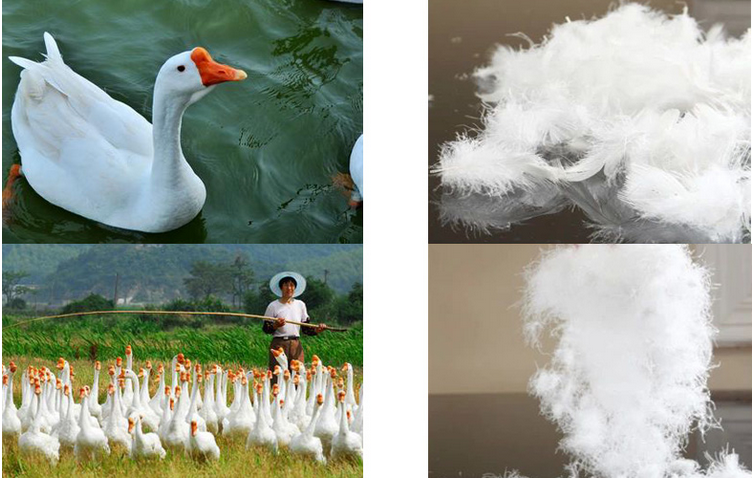 Hot Luxury China Supplier New Design Duck Amp Goose Down