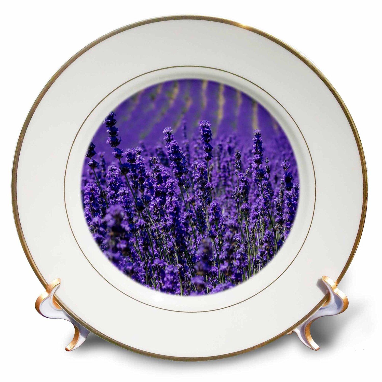 Danita Delimont - Flower - Lavender farm, Furano, Hokkaido Prefecture - 8 inch Porcelain Plate (cp_225871_1)
