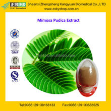 GMP Factory Supply Natural Mimosa Pudica Extract Powder