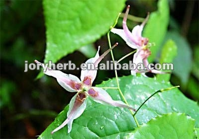 epimedium brevicornum extract powder