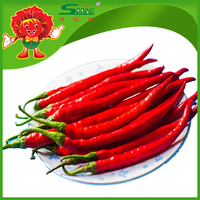 GREEN RED Chilli spicy green chilli 2015 organic type indian green chillies