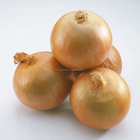 Touchhealthy supplyThin and deep green leaf.Round and yellow ball onion seeds for sale package 100gram/bags