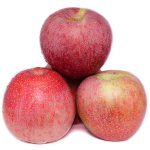 fresh red qinguan apple