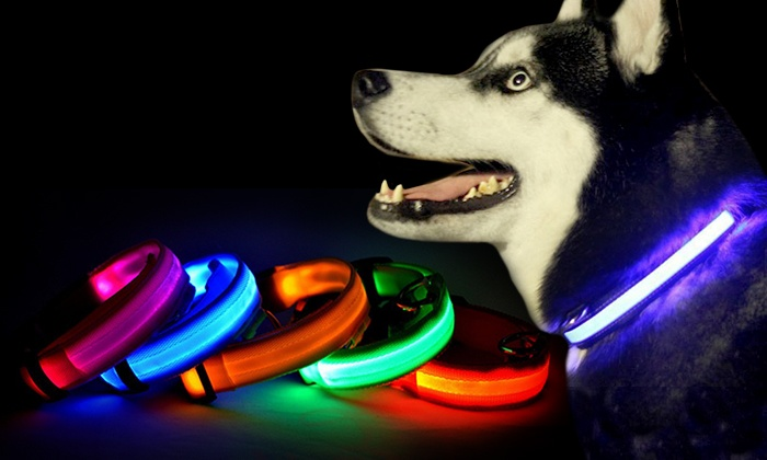 Image result for led dog collar