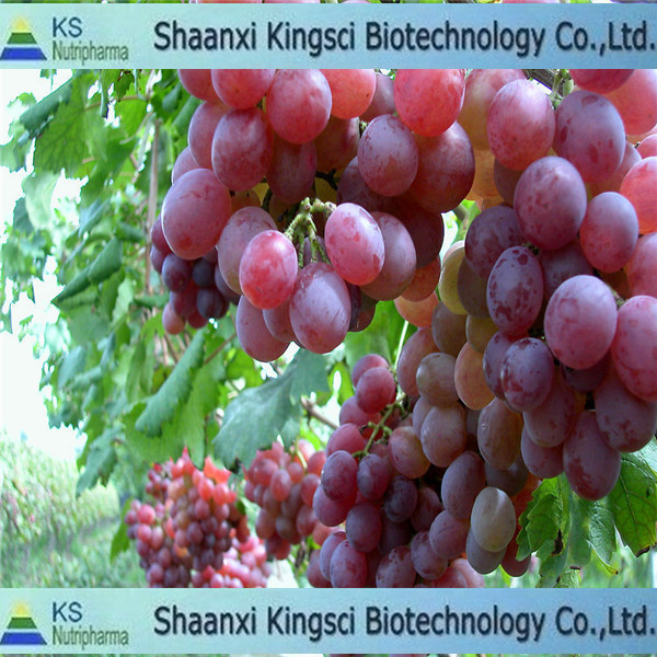 The lowest price for top grade grape seed oil price
