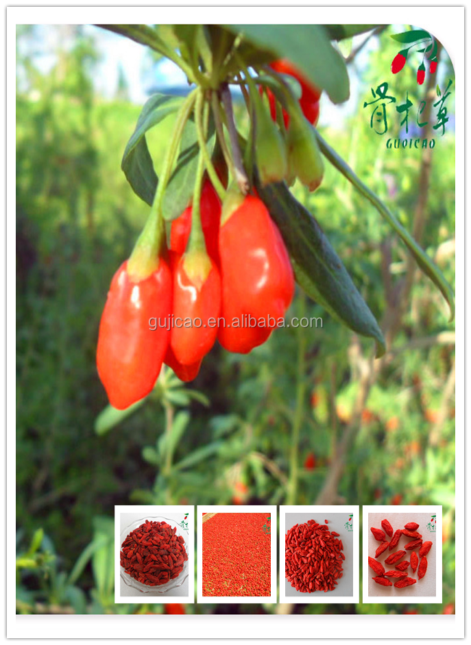 how to grow goji berries from seed