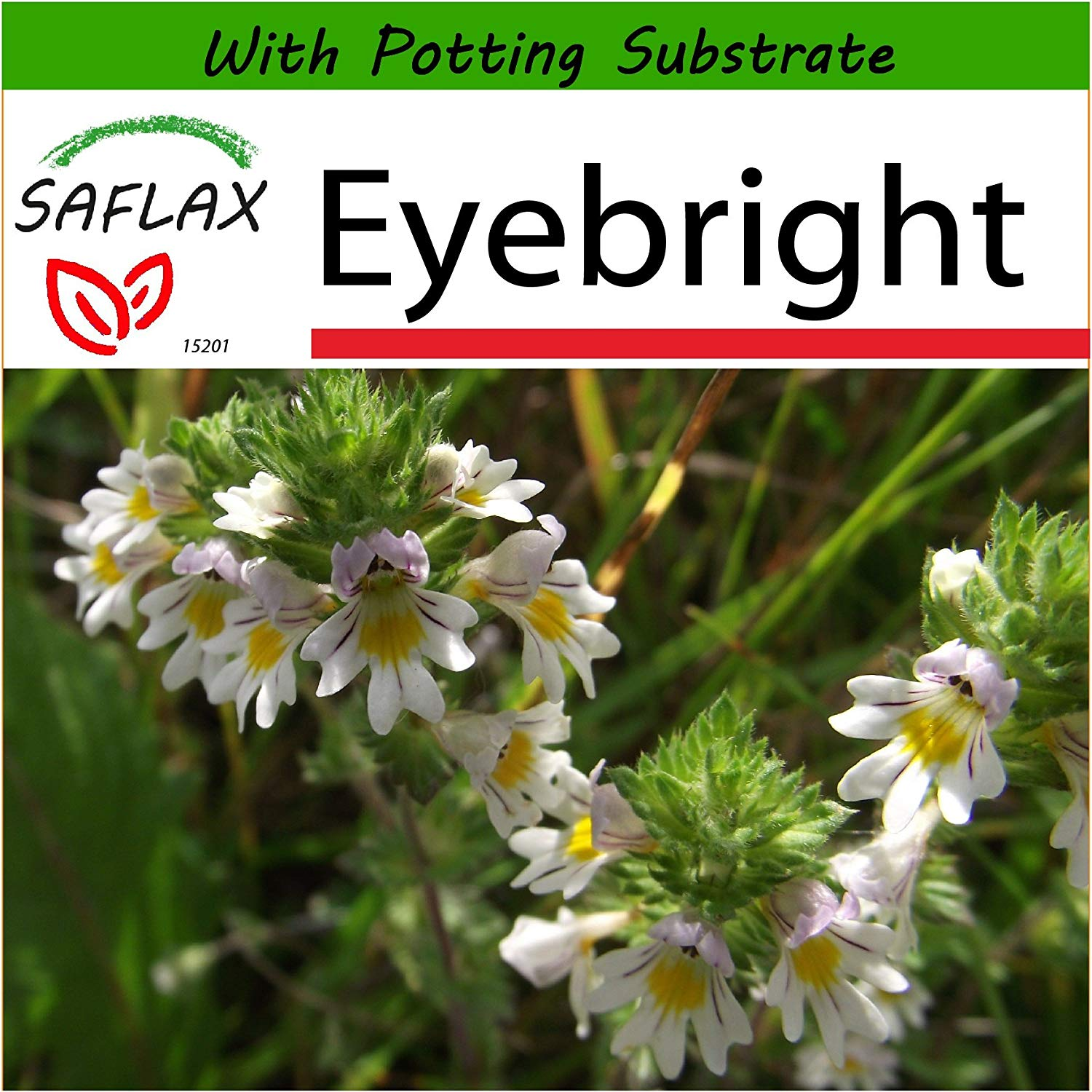 SAFLAX - Eyebright - 200 seeds - With soil - Euphrasia officinalis