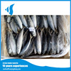 90-100g Hot selling horse mackerel /Muroaji fresh sea fish with reasonable prices exported from China for sale