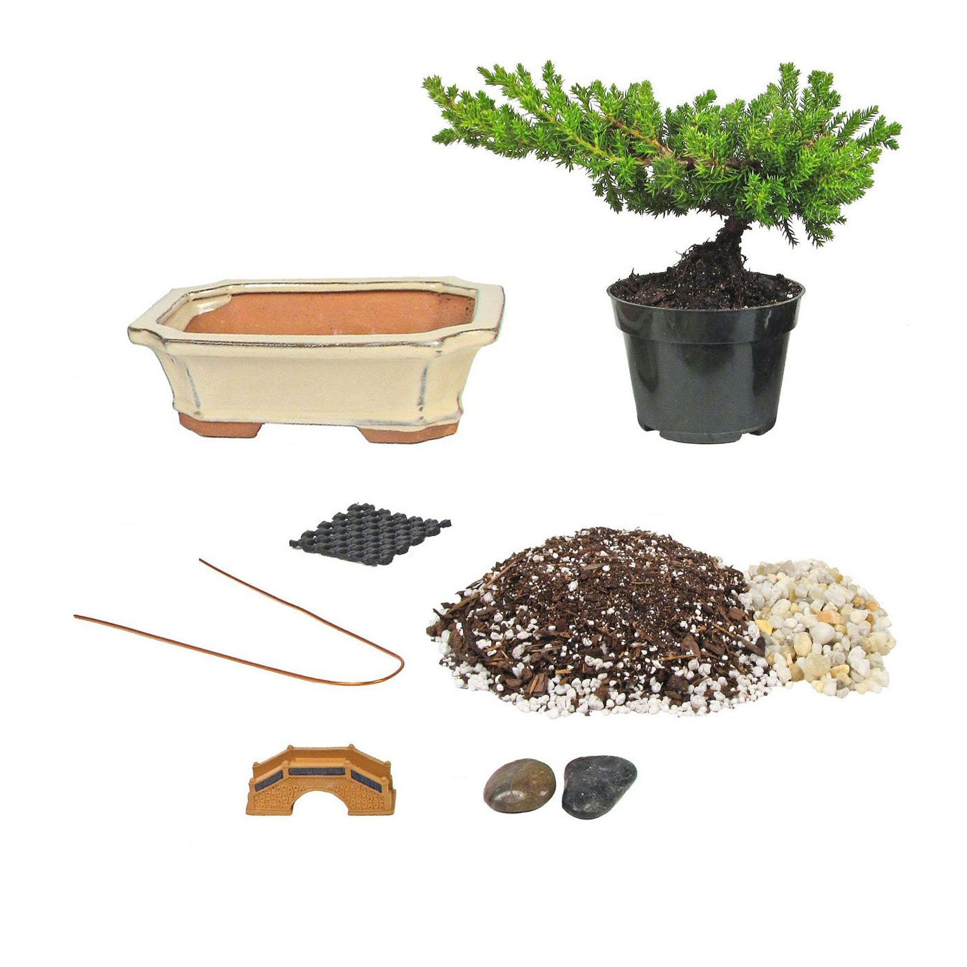 Eve's Bonsai Tree Starter Kit, Complete Do-It-Yourself Kit with 6 Year Old Small Japanese Juniper