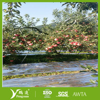 Plastic film mulch/Fruit Reflective Film for agriculture