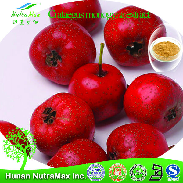 100% Natural Crataegus monogyna extract ,natural hawthorn berry extract powder,chinese hawthorn p.e