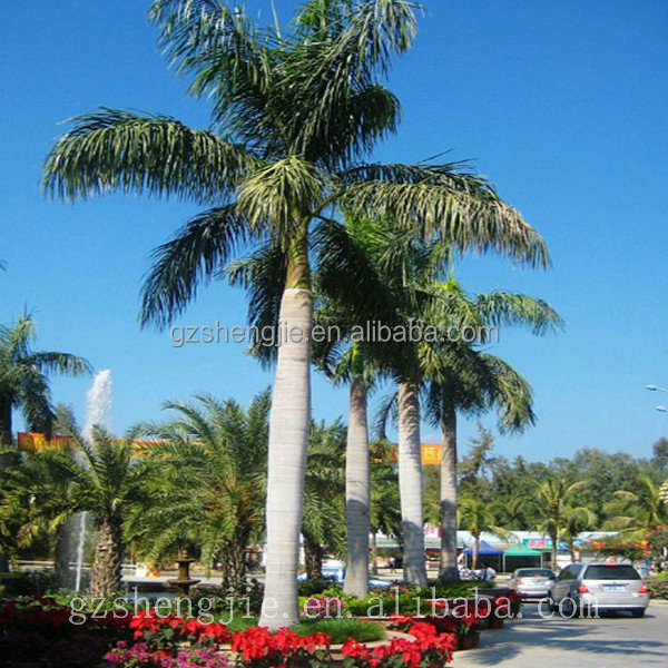 outdoor park decoration artificial king coconut trees in factory price