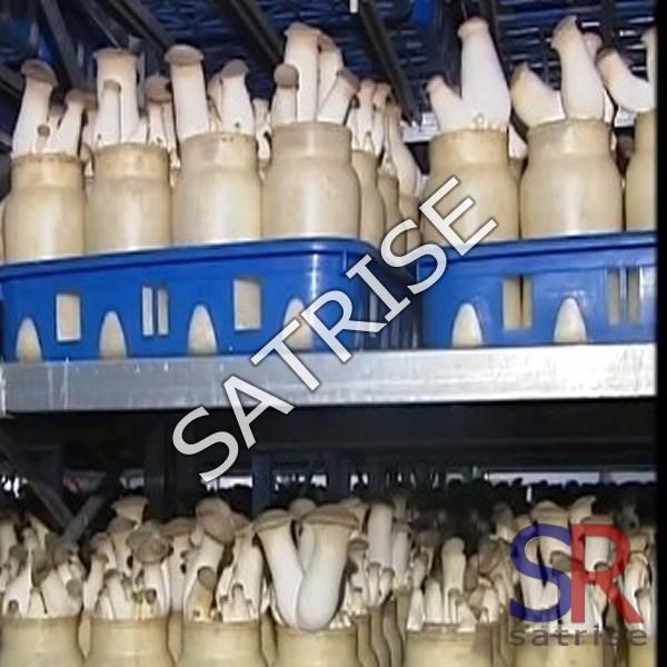 Good quality China hot sales plastic 720ml Mushroom Spawn bottle
