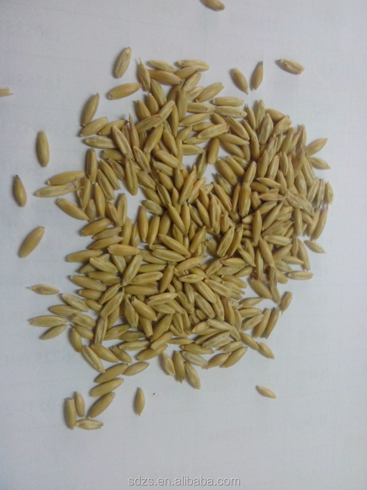 2014 hulled naked oats popular with buyers