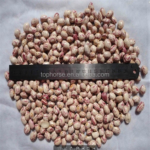 Kinds of Agriculture beans for sale, white kidney beans red kidney beans and black kidney beans