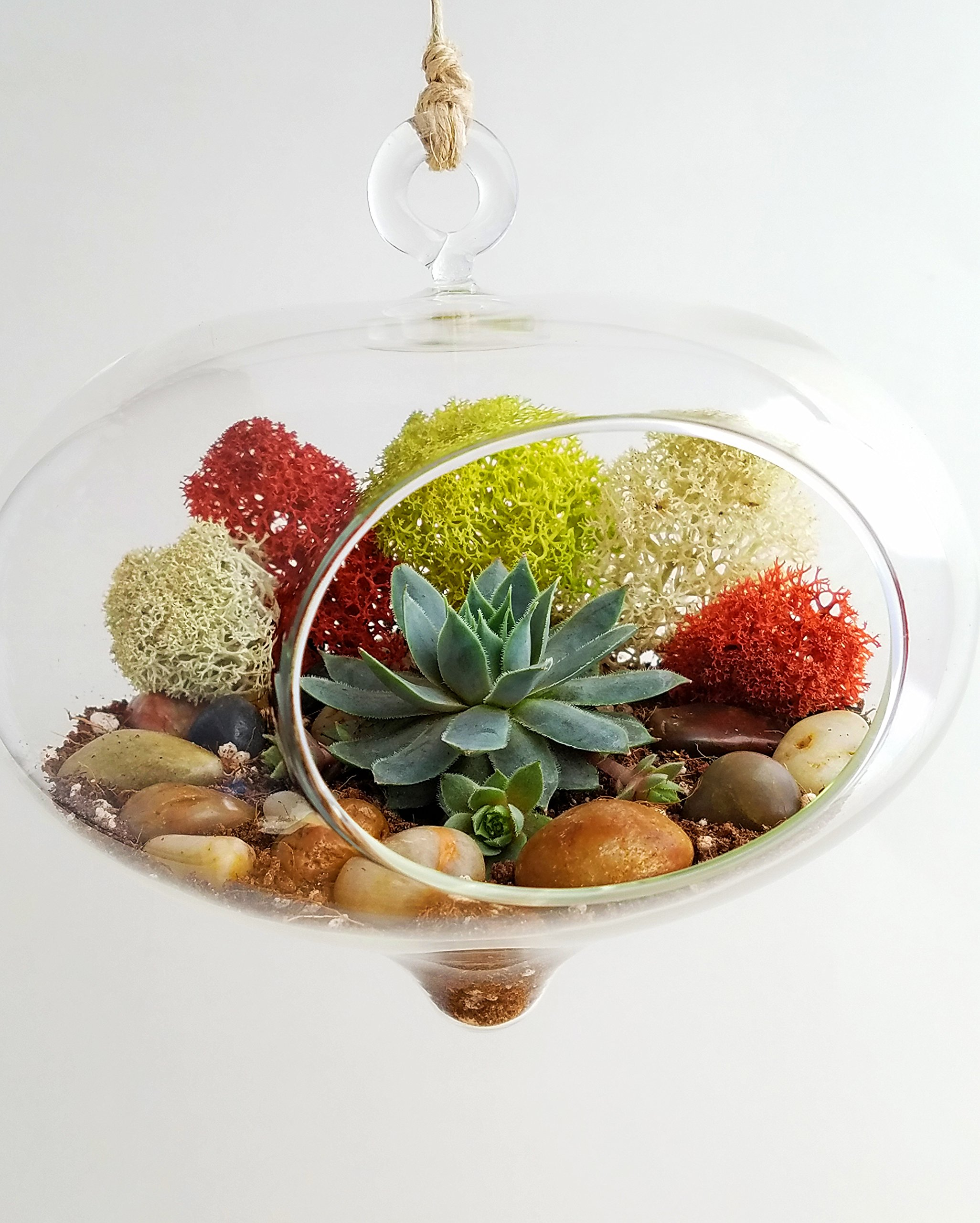 Cheap Succulent Terrarium Find Succulent Terrarium Deals On Line At
