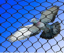 Black virgin HDPE agricultural bird netting with factory price